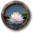 Gather lotus flowers.png