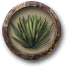 Pick agaves.png